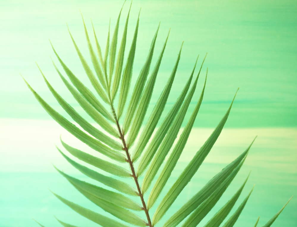 Palm-fronds-are-the-epitome-of-summer-style