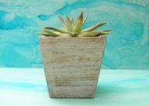 Potted-succulent-adds-a-crisp-summer-vibe-217x155