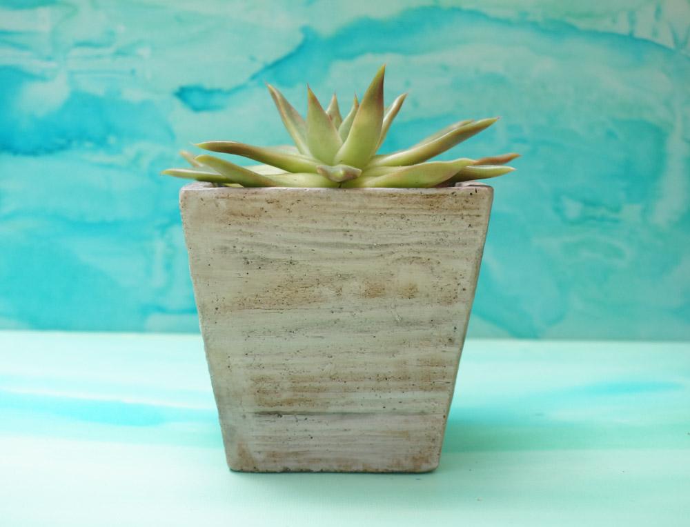 Potted-succulent-adds-a-crisp-summer-vibe