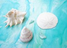 Seashells-are-treasures-from-the-sea-217x155