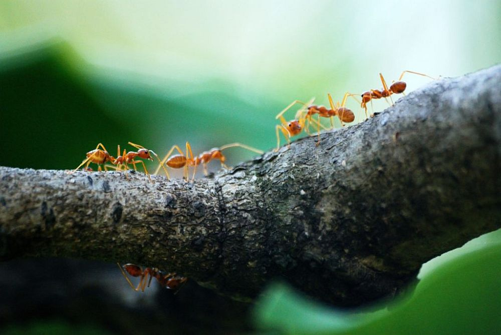What Kills Ants Instantly Natural Pet Safe Home Remedies