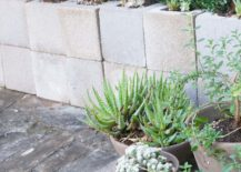 Backyard-decorating-with-succulents-217x155