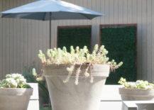 Backyard-style-on-a-budget-217x155