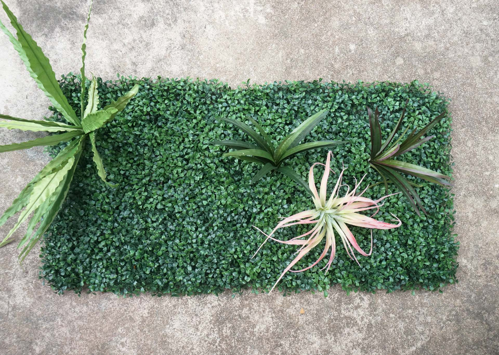 Begin-filling-in-your-living-wall-with-greenery