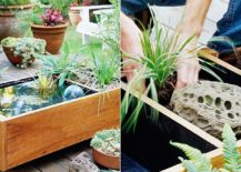 Create-your-own-easy-pond-in-a-box-for-the-tiny-backyard-217x155
