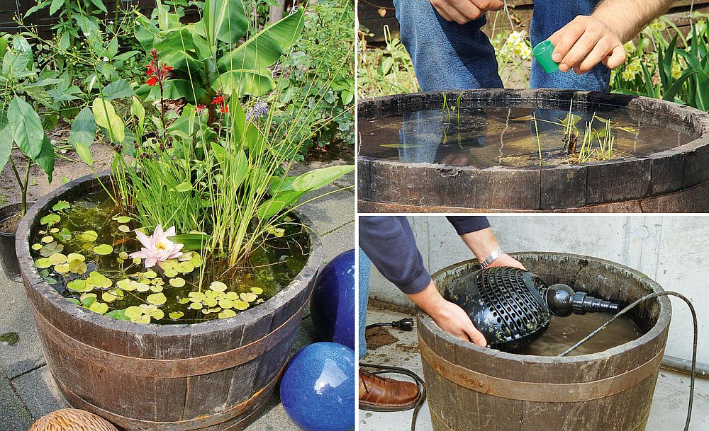 DIY Water feature can be something as simple as a pond in a barrel