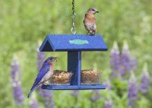 Duncraft-EZ-Bluebird-Feeder-offers-a-template-you-can-easily-copy-217x155