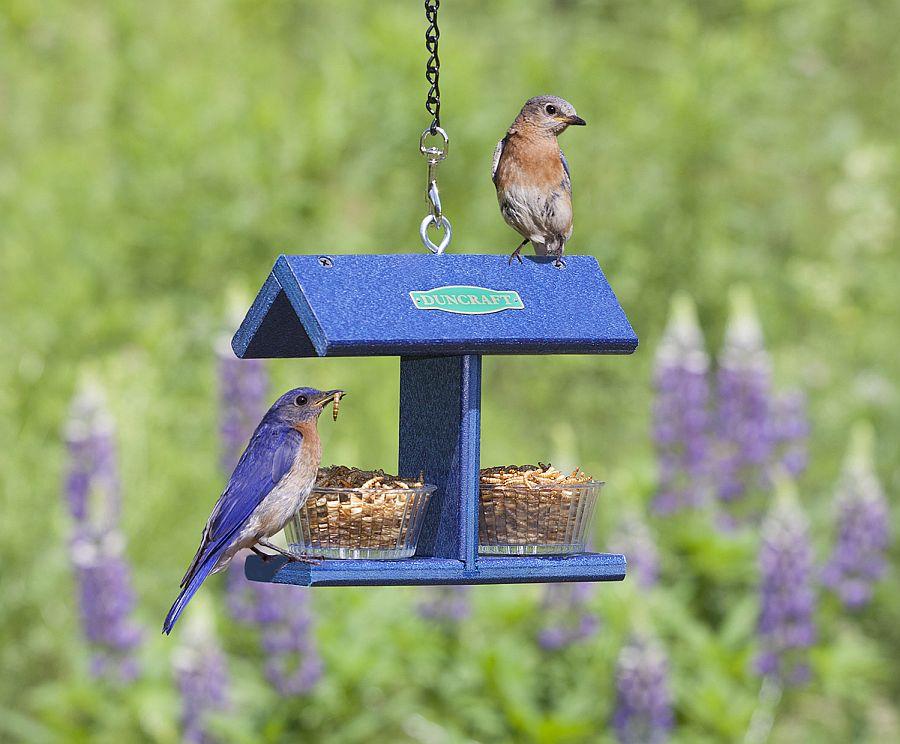 Duncraft-EZ-Bluebird-Feeder-offers-a-template-you-can-easily-copy