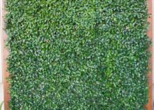 Faux-boxwood-creates-an-evergreen-feel-217x155