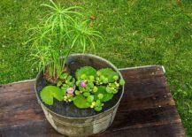Mini-water-garden-DIY-idea-in-a-container-217x155