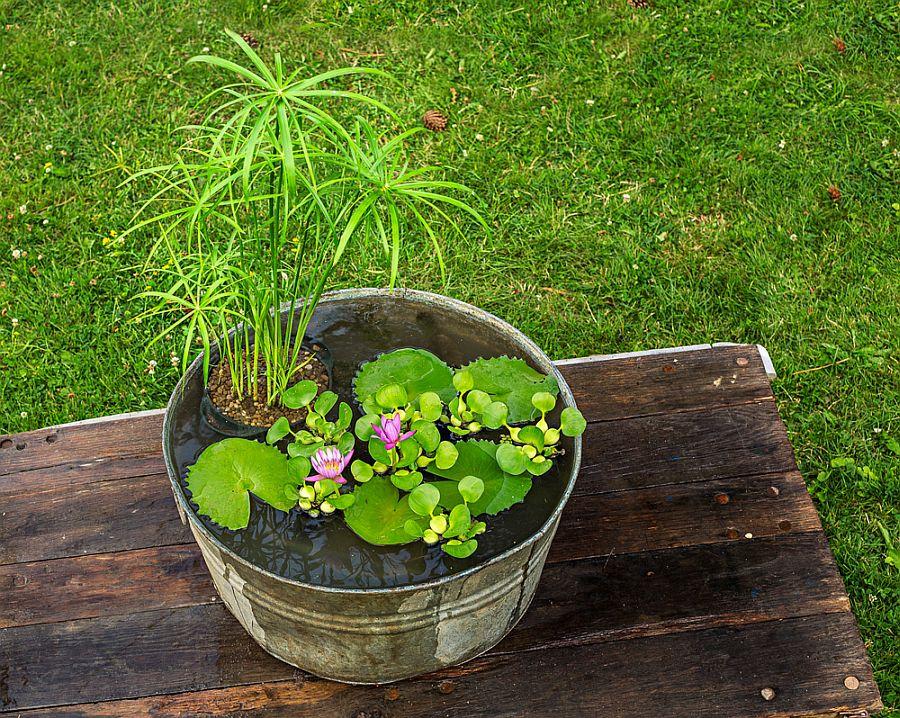 Mini water garden DIY idea in a container