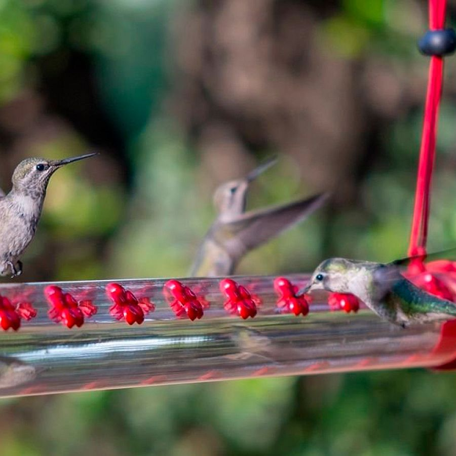 Perfect-feeder-for-those-Hummingbirds-gracing-your-yard