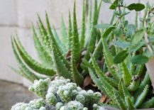 Potted-plants-add-instant-style-217x155