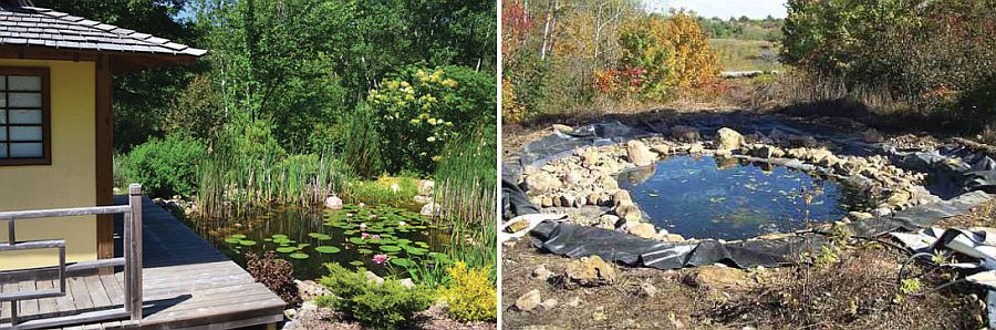 Shallow natural DIY pond full of vibrant flora