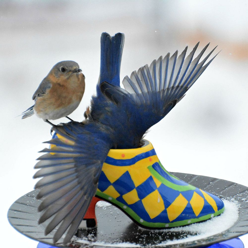 Spellbindingly-beautiful-bird-feeder-crafted-from-an-old-shoe