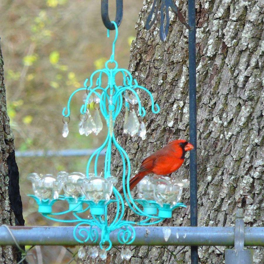 Stylish-and-chic-Chandelier-bird-feeder-DIY