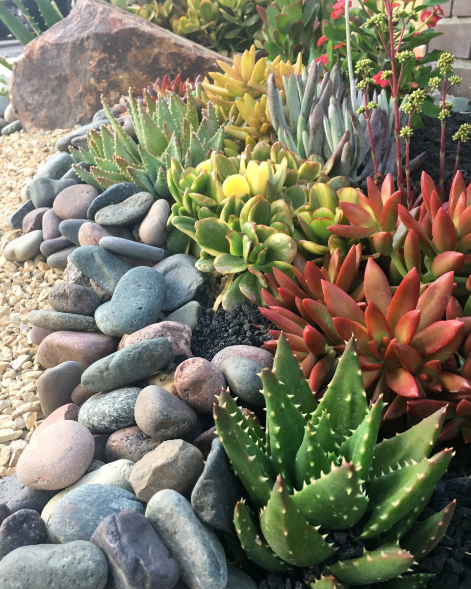 Succulent garden featured at Southwest Boulder & Stone