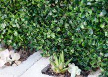 Succulent-garden-greenery-217x155