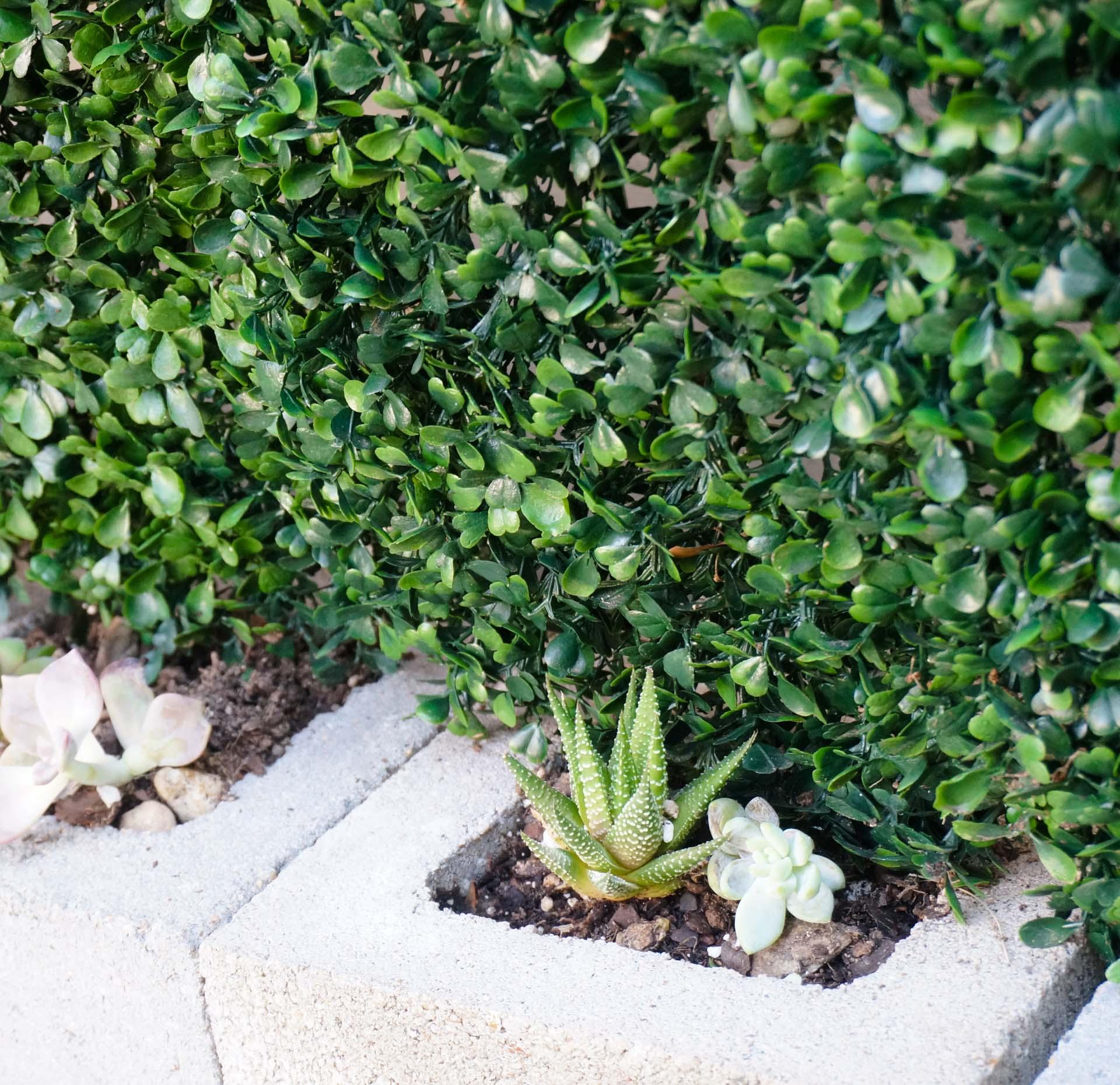 Succulent garden greenery