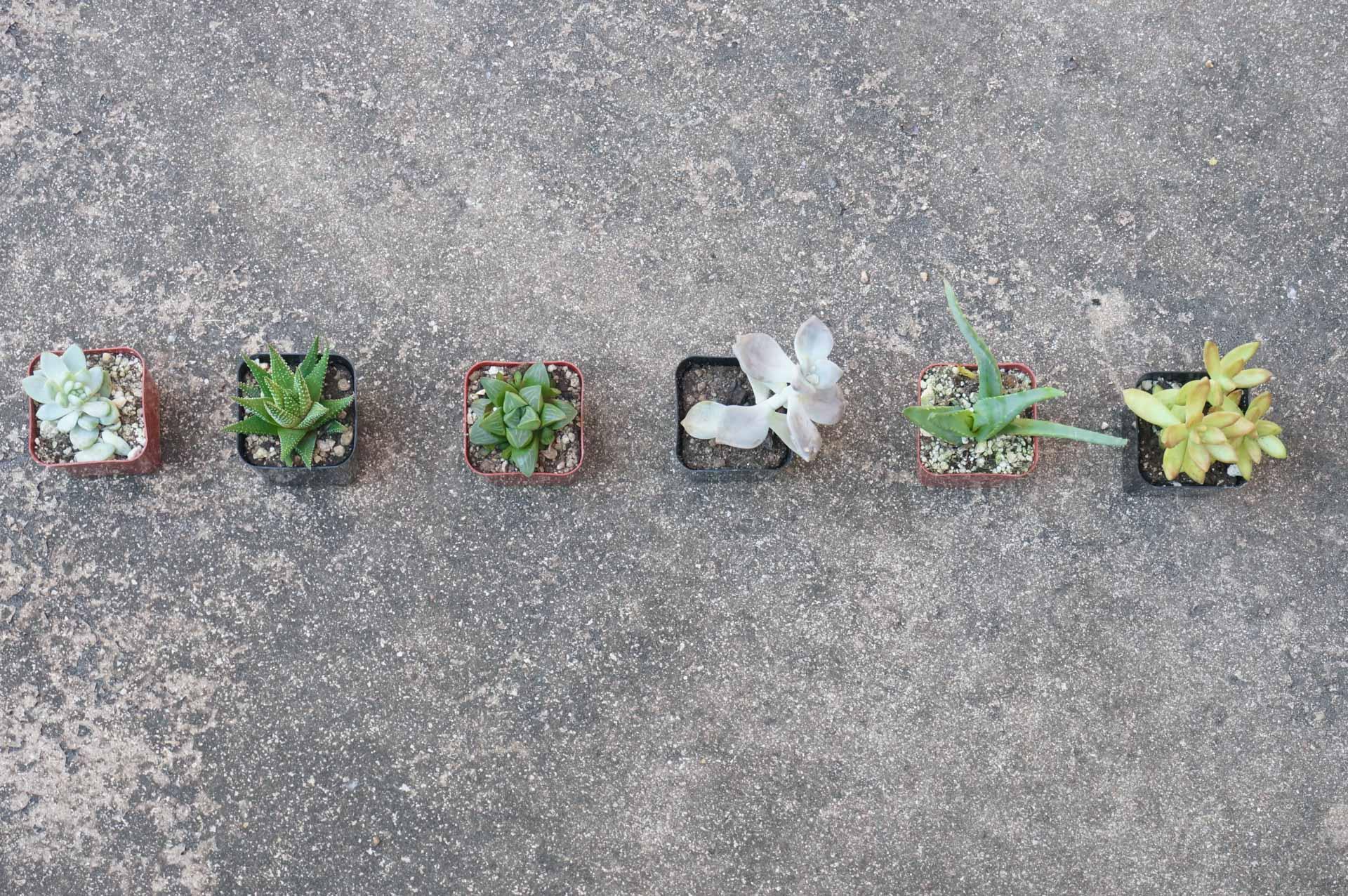 Succulent-garden-samples-1