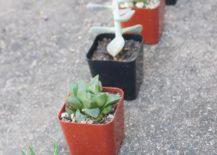 Succulent-garden-style-217x155