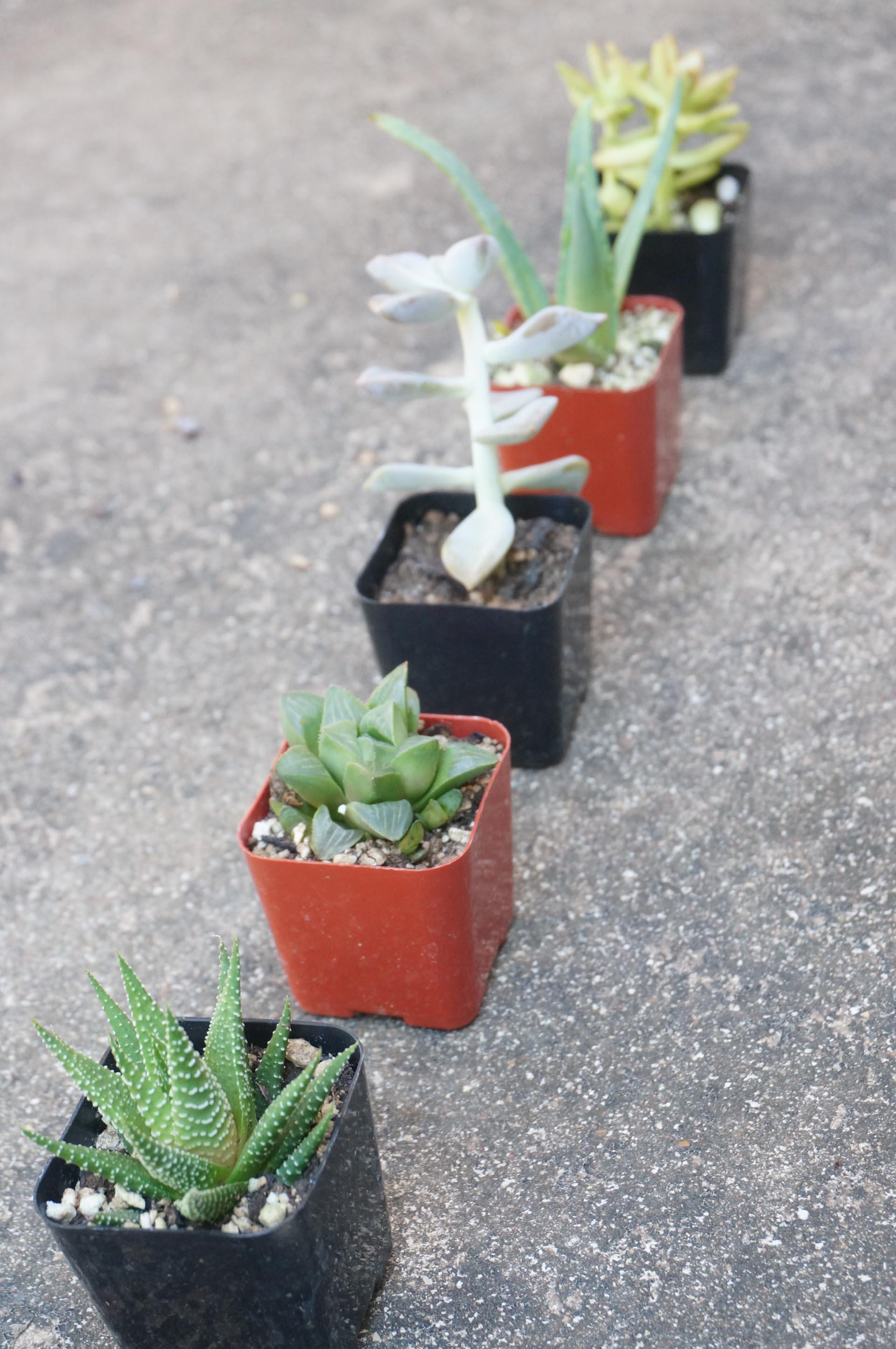 Succulent garden style