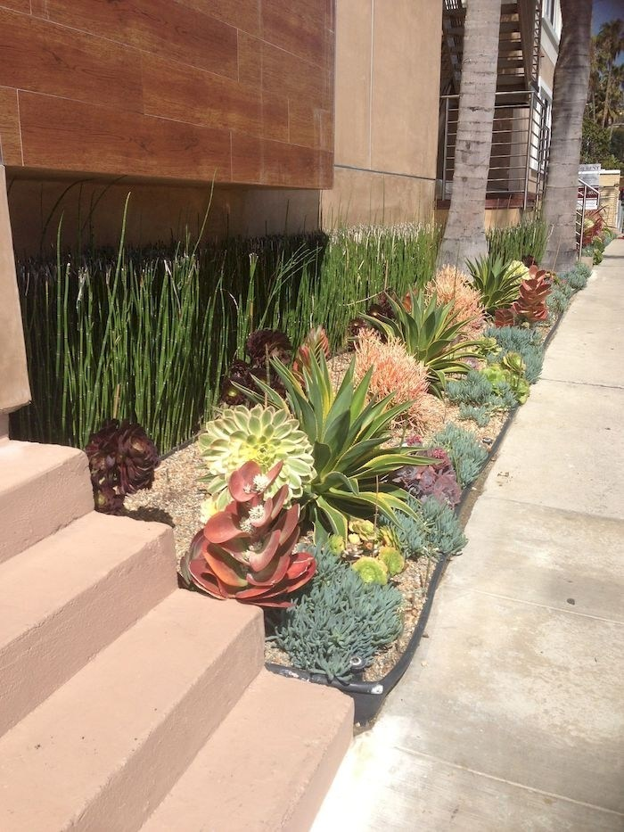 Succulent garden with beautiful colors on display