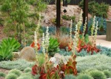 Succulent-garden-with-red-leaf-details-217x155