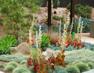 Tips for Planting a Succulent Garden