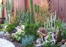 Succulent-garden-with-tall-cacti-217x155