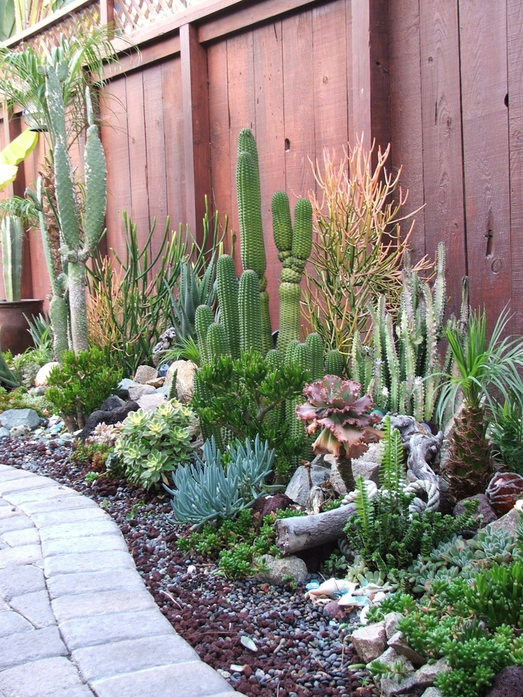 Succulent garden with tall cacti