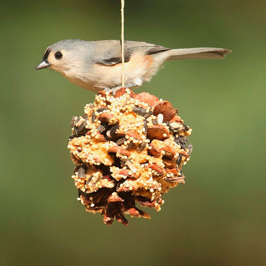 Ultra-easy-pine-cone-DIY-bird-feeder-idea