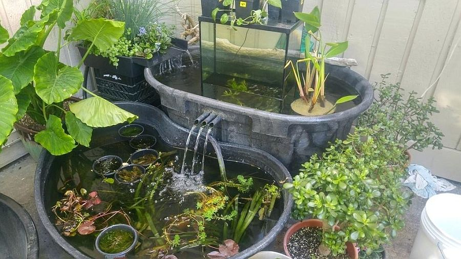 Use-those-old-tubs-to-build-cool-and-small-garden-ponds-with-fish