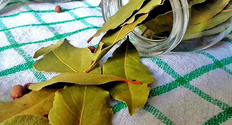 Using bay leaves to keep ants away