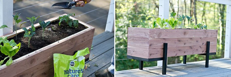 Be it salad or veggies this DIY planter works everywhere