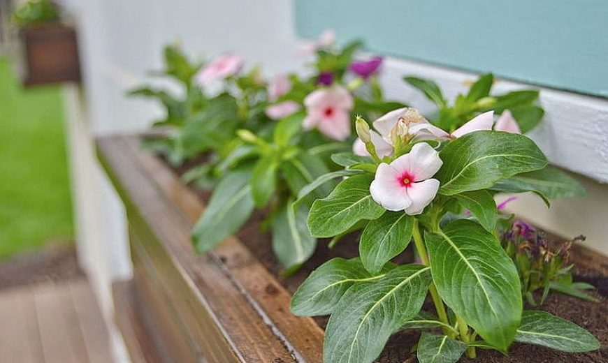 27 DIY Flower Box Planters for Fancy Windows and Beyond