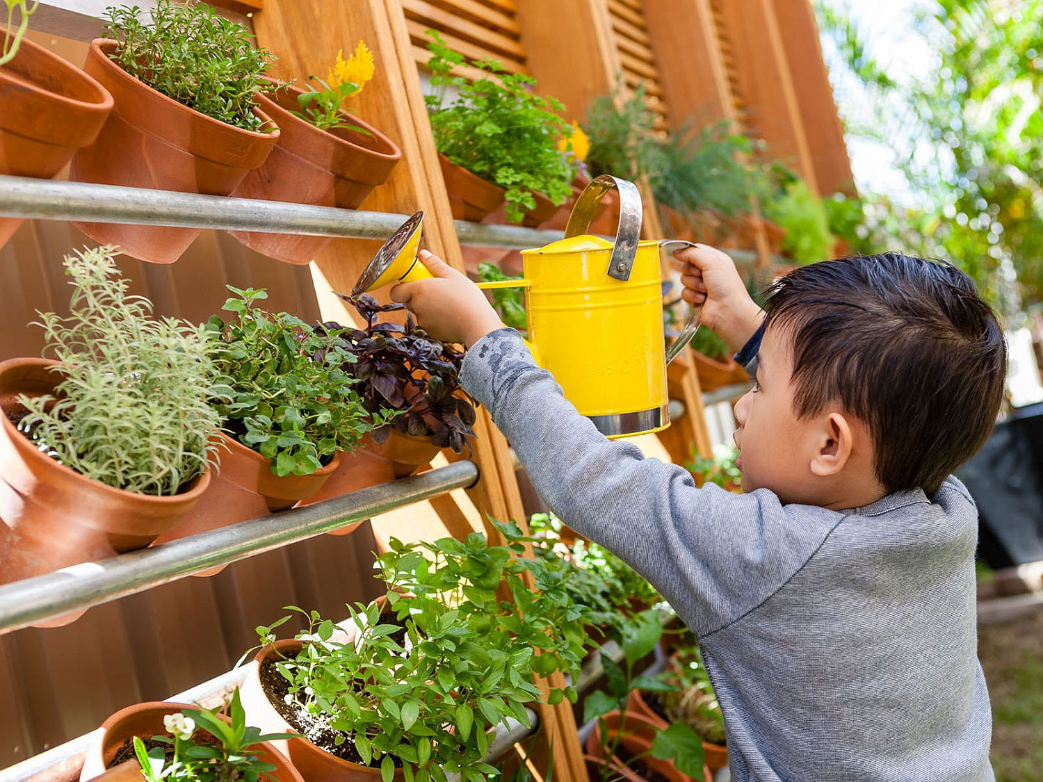 Using vertical space for a cultured herb garden