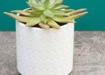 Succulent-houseplant-in-a-modern-pot-217x155