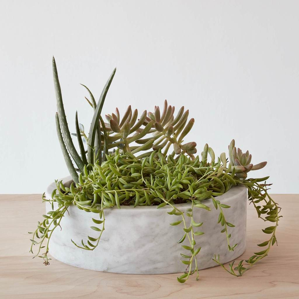 Marble planter with succulents