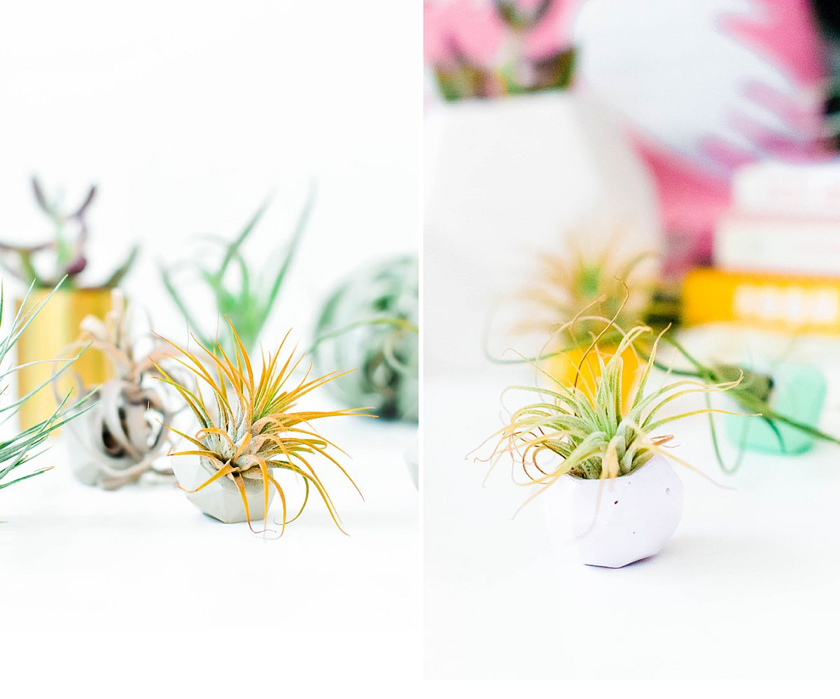 Geo style combined with concrete charm with a fab Gem Mini Planters