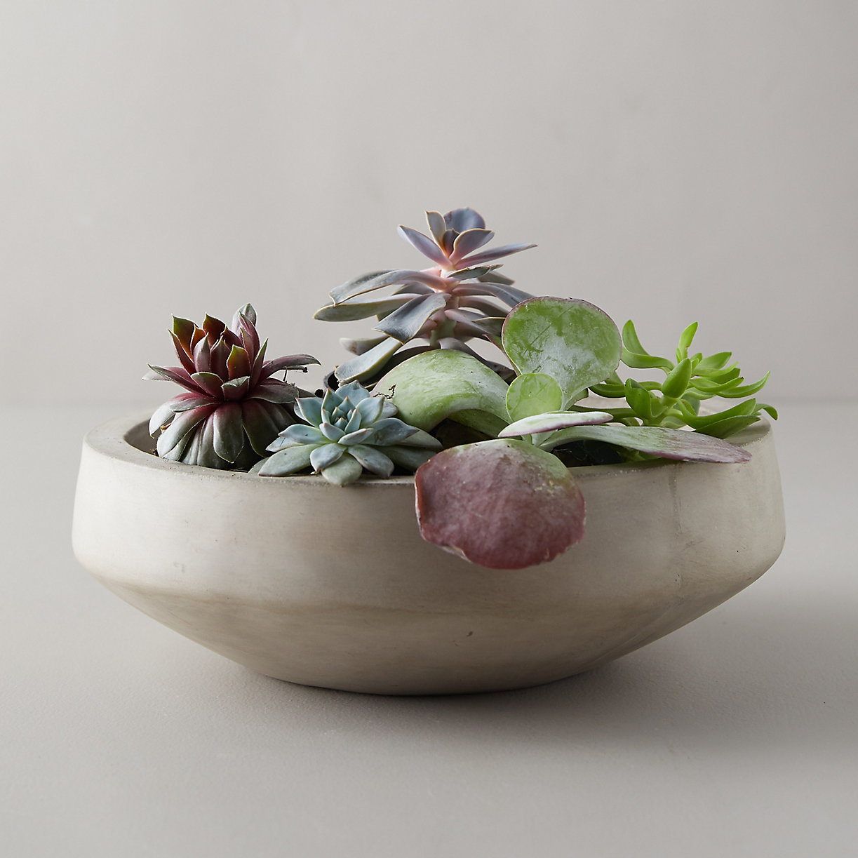 Concrete bowl of succulents