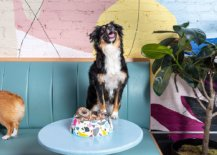 Pet-friendly-cafe-of-New-York-City-with-bright-pops-of-color-welcomes-dogs-38941-217x155