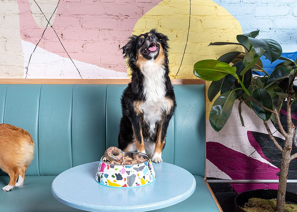 Pet-friendly-cafe-of-New-York-City-with-bright-pops-of-color-welcomes-dogs-38941
