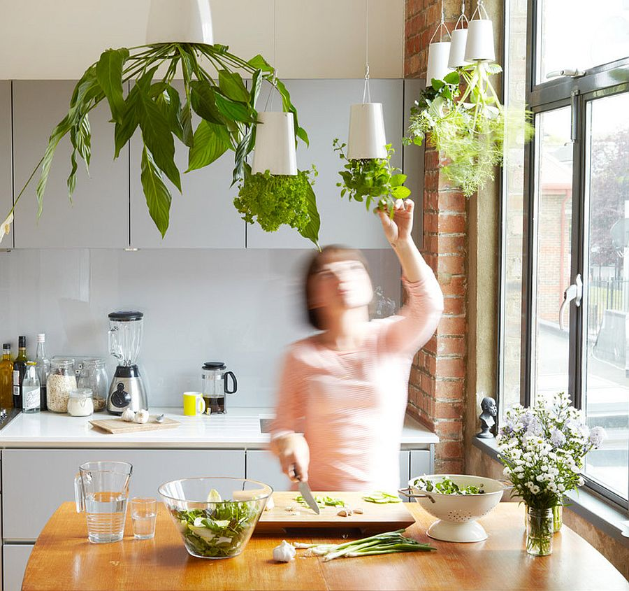 Boskke Sky Planters can turn your kitchen herb garden upside down and transform the kitchen ceiling forever!