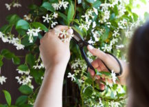 Cutting-fresh-flowers-for-a-picnic-67679-217x155