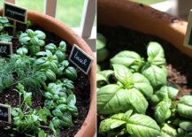 Herbs-planted-in-a-terracotta-pot-with-signs-for-each-one-51407-217x155