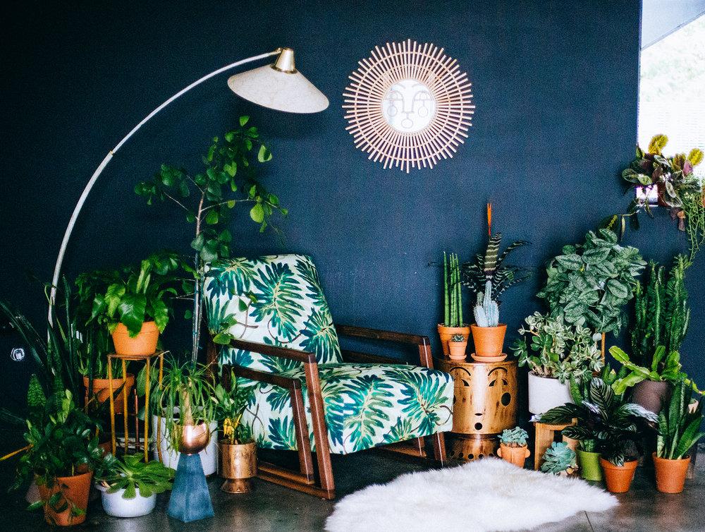Justina-Blakeney-Loves-Plants-67411