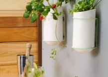 Small-wall-mounted-planters-are-great-in-tiny-kitchens-where-there-is-very-limited-space-to-work-with-88617-217x155