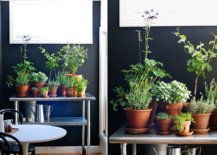 Turn-the-old-bar-cart-into-a-perfect-space-for-a-herb-garden-along-with-a-few-terracotta-pots-this-spring-24318-217x155