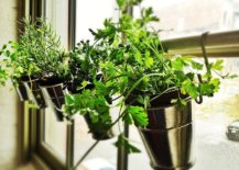 Turn-your-kitchen-window-sill-into-a-space-for-the-small-herb-garden-83956-217x155